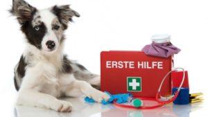 Erste Hilfe bei Hunden - Tageskurs